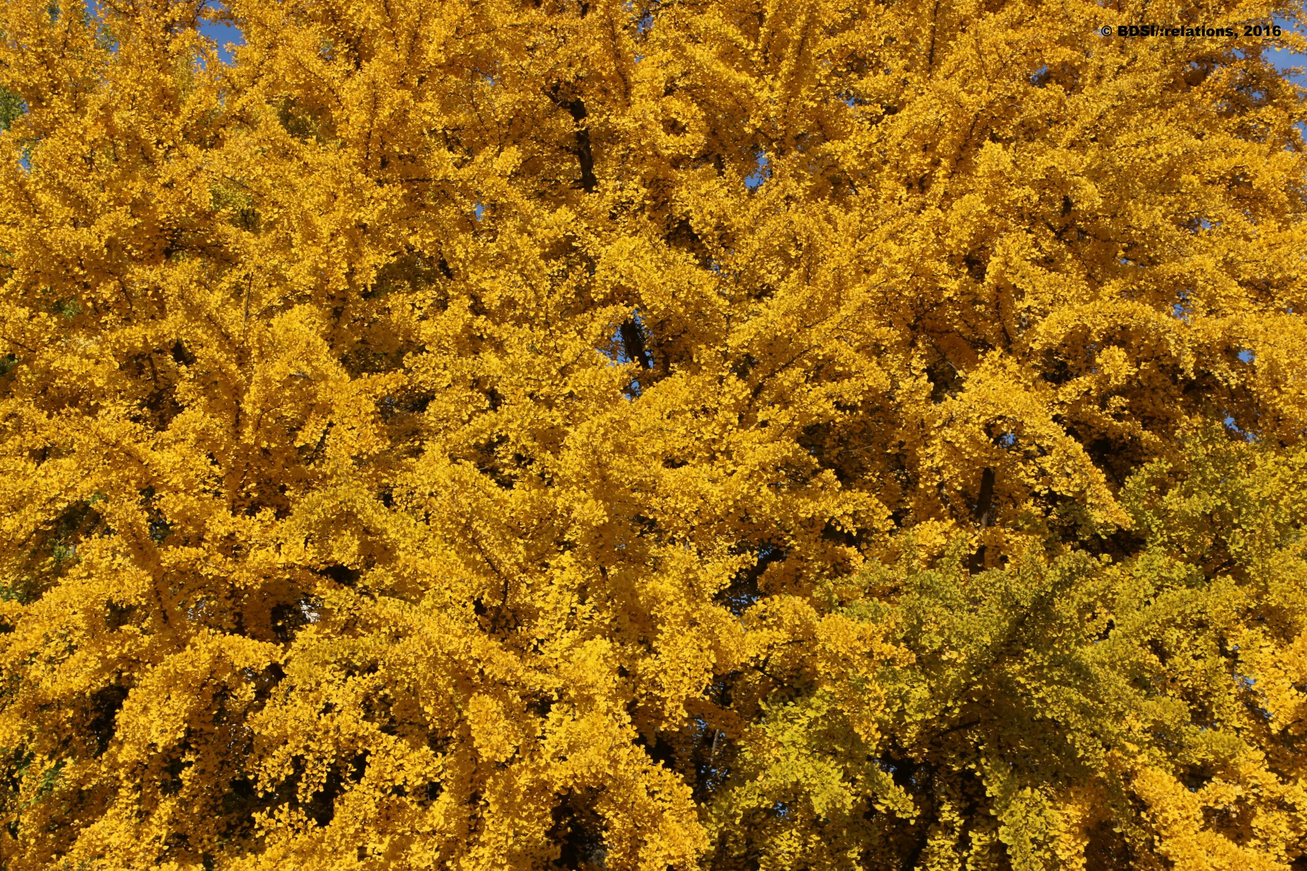 Herbstlaub in knalligen Farben